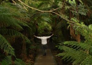 Walking in Awe through forest file5561291134459
