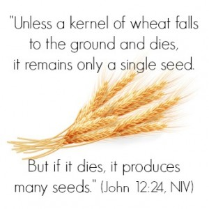 """Jesus said, """"Very truly I tell you, unless a kernel of wheat falls to the ground and dies, it remains only a single seed. But if it dies, it produces many seeds."""" (John 12:24, NIV)   KingdomNomics.com"""