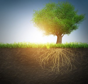 Rooted in the soil of God's love | KingdomNomics